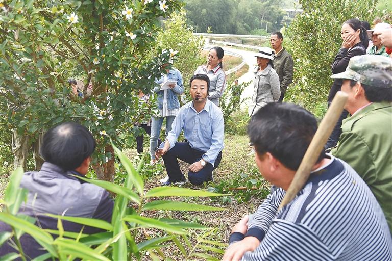 海大热带作物学院专家送培训上门 博导到田头教种植户种油茶